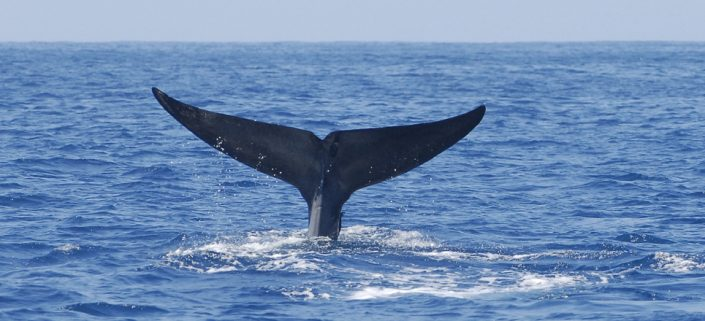 Whale watching trincomalee